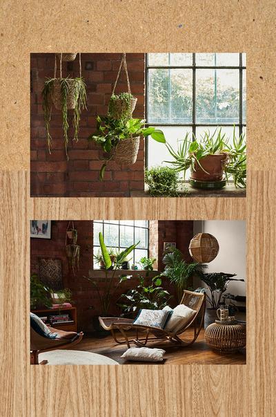 Interieurafbeelding met bloempotten