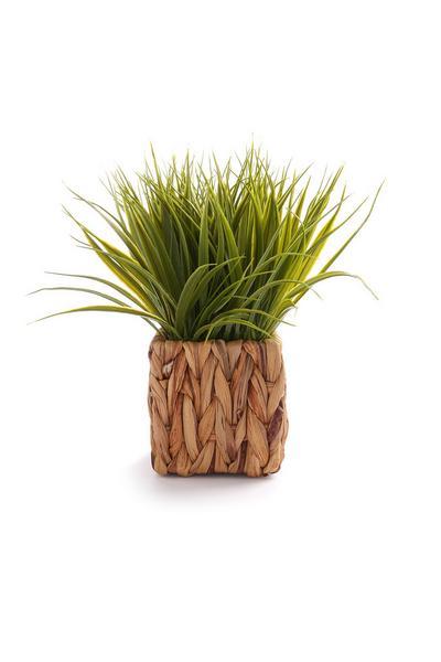 Imitatievetplant in rieten pot